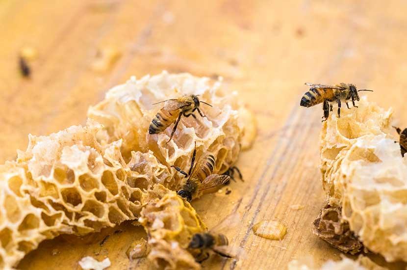 Wosk pszczeli ma właściwości lecznicze, przeciwzapalne i antybakteryjne