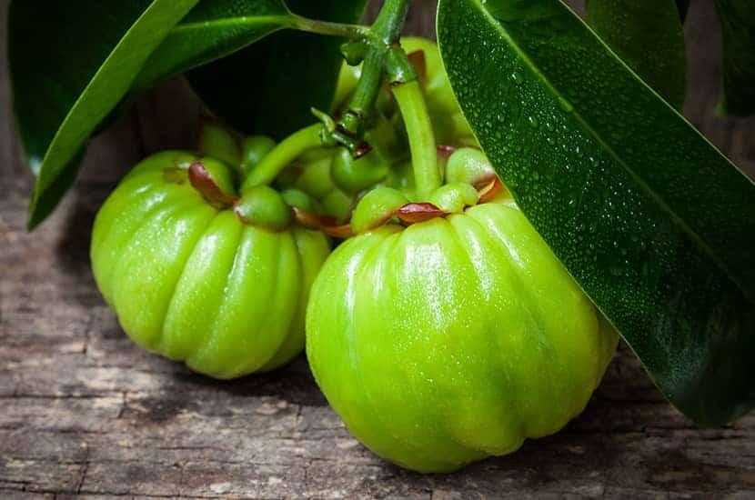 Garcinia cambogia zawiera związki, które mogą stymulować utratę wagi.