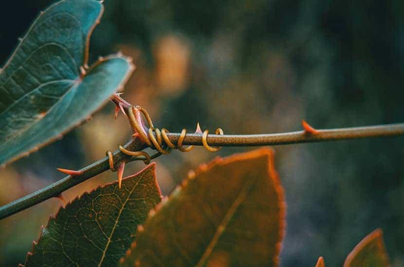Wyciąg z liści pokrzywy może poprawić wygląd wyprysków na skórze