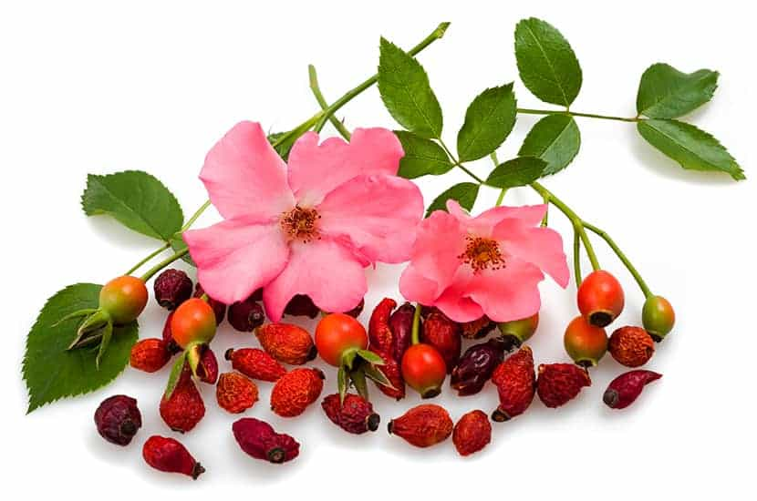 Rosehip May Be Helpful in Preventing Diabetes and Reducing Cardiovascular Risk